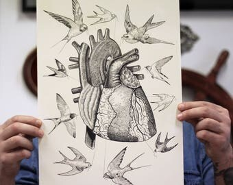 anatomical heart and swallow, bird print, anatomy print, human bodyprint, giclèè print, animal print