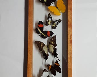 Wood frame butterfly