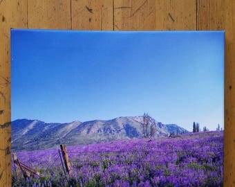 Mountain Scene - Meadow of Purple