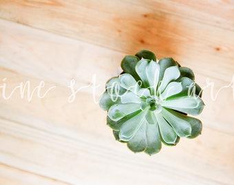 Succulent Stock Image | Instant Download | Blog/Website Stock Image