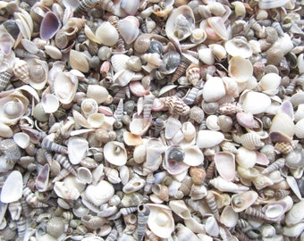 "Small Shell Mix-1/4""-1""-3 oz-1/2 cup-Tiny Shell Mix-Craft Seashells-Small Seashells-Beach Wedding Decor-Seashells Supplies-Tiny Seashells"