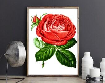 Botanical Poster Red Rose Botanical Print Botanical Wall Art Flower Wall Art Botanical Decor Kitchen Wall Art Kitchen Posters Kitchen Prints