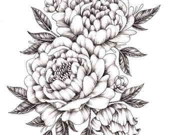 Peony Ink Drawing - A4 and A5 Prints