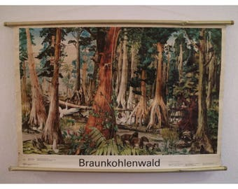 Vintage School card/vintage wall map, wood, paper: The brown Coal forest