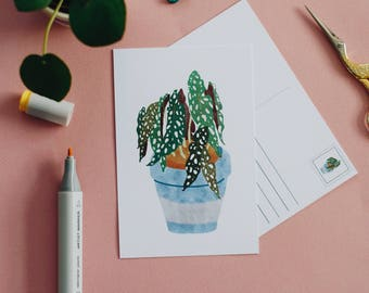Begonia Maculata (dotted plant) A6 Postcard
