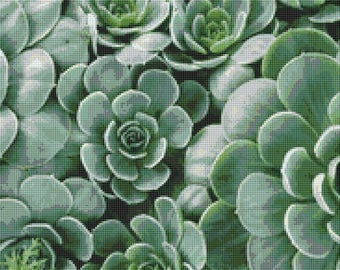 Succulents Counted Cross Stitch Pattern / Chart, Instant Digital Download  (AP246)