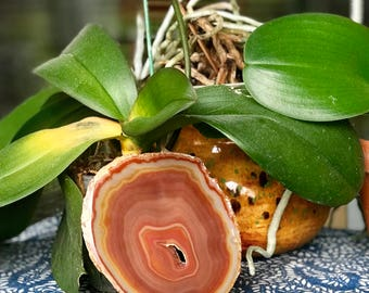 Banded agate slice