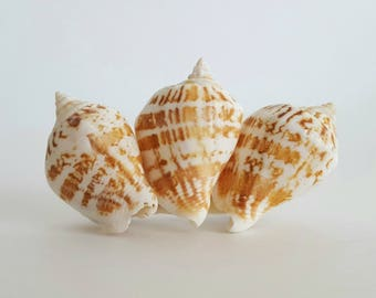 Seashell Barrette