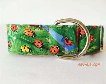 Martingale Dog Collar or Buckle Dog Collar Ladybugs colors , Collar martingale, Greyhound Collar, s, dog leash, ladybugs - 4GUAUS.COM
