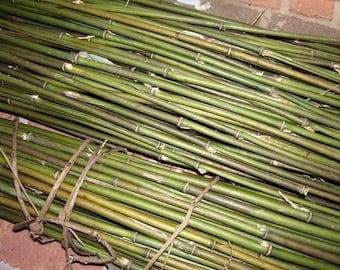 River Cane for Primitive Arrows (12 ct)