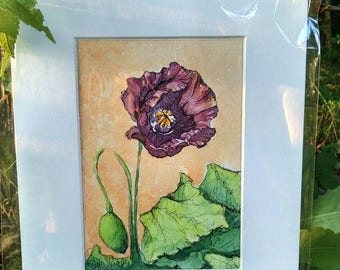 Matted Original Watercolor & Ink Painting of a Purple Poppy on Peach