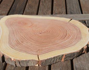 Maple wood cookie slice
