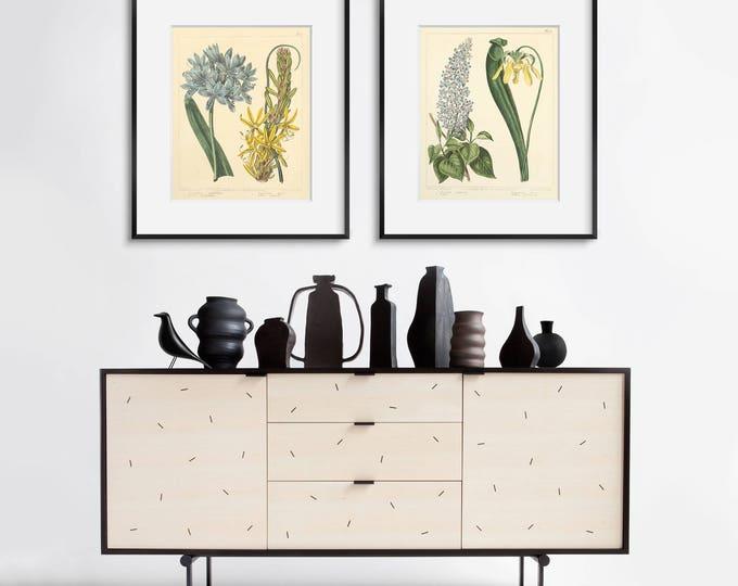 Botanical Print Set - Antique Botanical Prints - 2 Print Set - Antique Floral Art - Housewarming Gift - Modern Farmhouse Decor - Wall Art