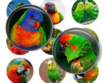 """1"""" Parrot Bottle cap images. Digital Collage Sheet. Printable images. Circles for Jewelry Making. Instant download"""