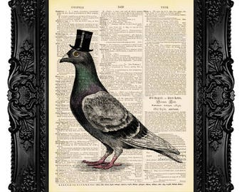 Mr. Pigeon Color, Bird Top Hat, Dove - ORIGINAL ARTWORK -Dictionary Art Print Vintage Upcycled Antique Book Page no.313