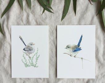 A6 Australian Female Blue Wrens