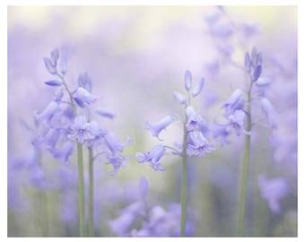 blue bells, flowers, botanical art print, flower photography, floral photography, floral home decor, fine art photography, floral wall art