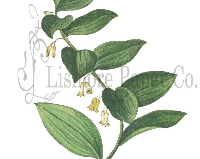 Flower Digital Collage Sheet, Greenery Digital Download Scrapbooking, Collage, Crafts, Cards, Wall Art, Clip Art, botanical, digital graphic