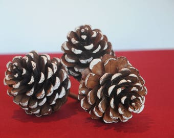 Set of three pine cones snow on a stick