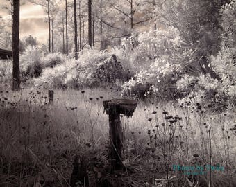 Fairy Forest with gnome throne photograph in infrared