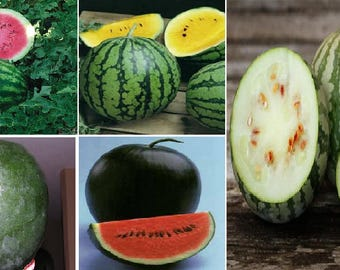 Watermelons (5 variety)