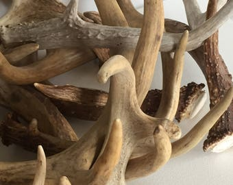 1 Lb Real Raw Deer Antlers 100% Natural Home Decor