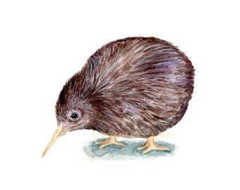 Kiwi Bird Print, Watercolor Kiwi, New Zealand Kiwi, Flightless Bird Print, Smallest Ratite