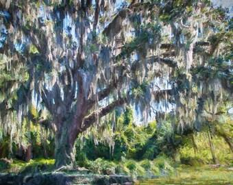 Old Tree Painting, SSI Tree Painting, Spanish Moss Tree, Old Tree Wall Art Decor