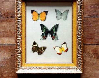 Vintage Framed Butterfly Print, Butterfly art, Butterfly Prints, Framed Art, Modern Art, Butterfly