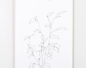 Blind Contour Botanical Line Drawing 3