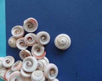 2 solid pendants drilled natural, spiral embossed shells.