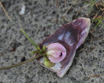 Sweet pea in sea shell