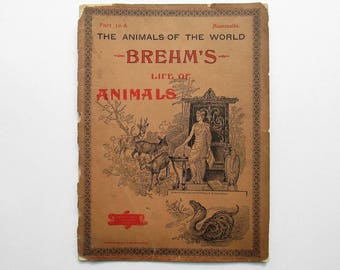 Antique 1896 Brehm's Life of Animals, Part 10-A, Illustrated, 1890's Booklet, Marquis & Company, Beasts of Prey: The Civet, Marten Family