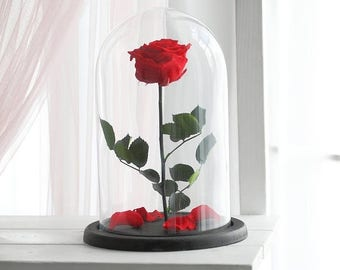 ON SALE Beauty and the beast rose (Large), Enchanted Rose, Rose in glass dome, Forever red rose, Rose in Glass, preserved rose, preserved fl