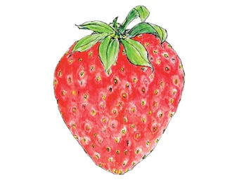 strawberry fruit drawing. strawberry watercolour and ink drawing, print, fruit wall art, summer drawing d