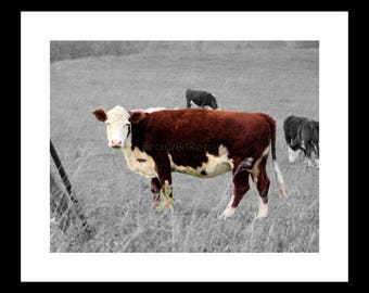 Brown Cow, Photography, Free Shipping, Print, Framed Print, Canvas Wrap, Canvas with Floating Frame, Wall Art, Home Decor, Nature Photograph