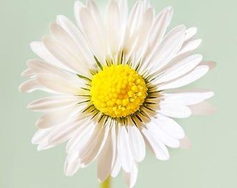 Summery Daisy Flower Greetings Card