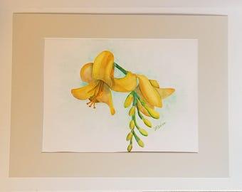 Yellow Crocosmia Watercolor