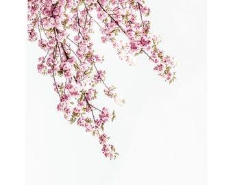 Flower Photography Print, Cherry Blossom