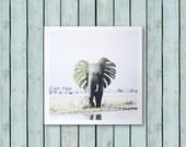Monstera Elefant