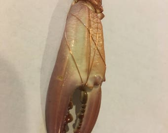 Bahamian crab claw with copper accent