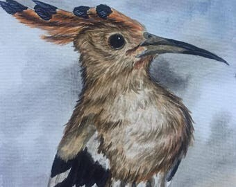 Hoopoe bird watercolor