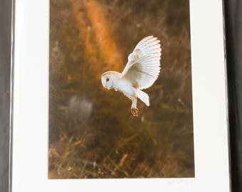 "Barn Owl Portrait  ""Caught In The Spotlight"" Photographic Print"