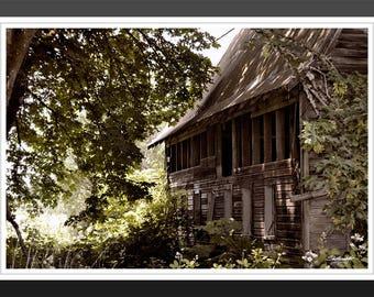 Dark Barn - fine art, fine art photography, Landscape, nature, barn, architecture, abandoned, vines, woods, trees