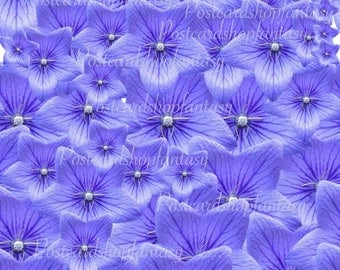 Violet texture pattern download flower pattern flower party