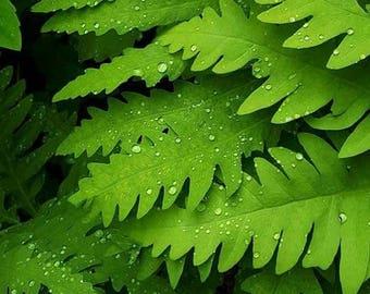 Morning dew on ferns color fine art print