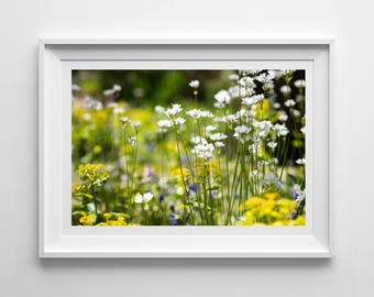 Spring Flowers, Original Photography Print, Landscape, Wall Art, Decor