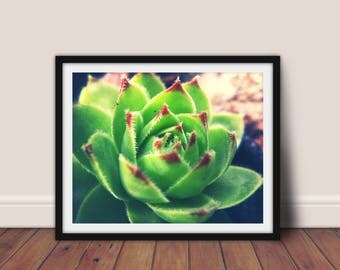 Succulent Print, Desert Decor, Cactus Wall Art, Succulent Photography, Botanical Wall Art,  Nature Photography,Cactus Printable,Cactus Print