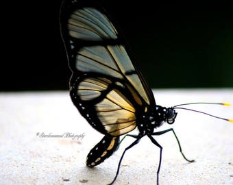 Butterfly at Rest, Nature Photography, Color Photography, Fine Art Photography