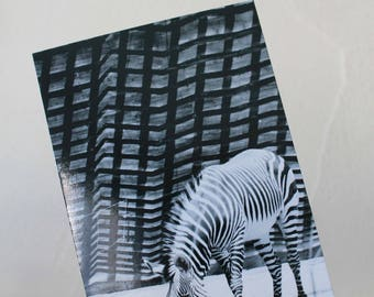 "Postcard ""Zebra"" in black and white"